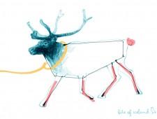 Deer dear to our hearts – Icelandic reindeer