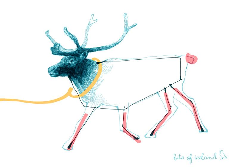 East Fjords Iceland reindeer