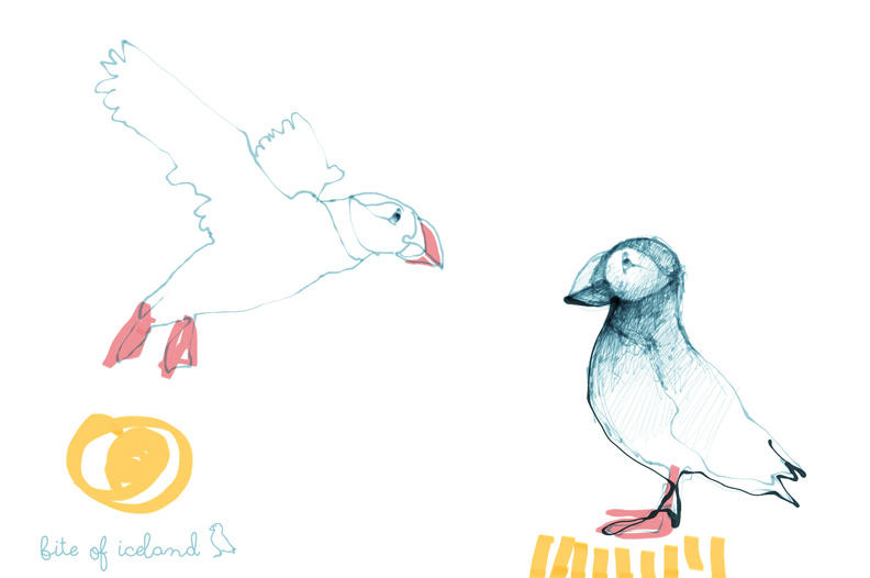 Puffins Drawing - Bite of Iceland - Iceland travel blog