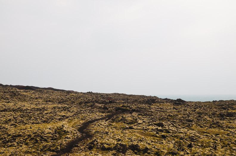 Lava field Vestmannaeyjar