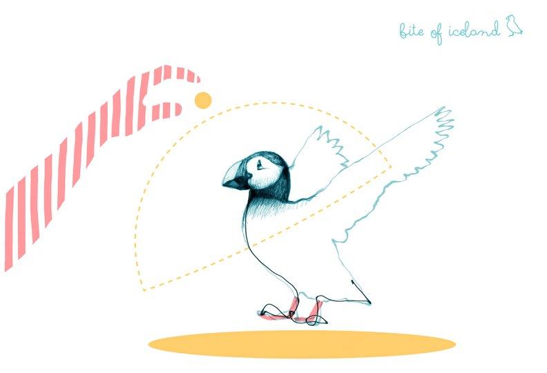 Puffin illustration