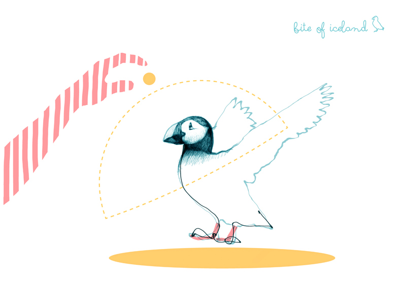 Puffin illustration