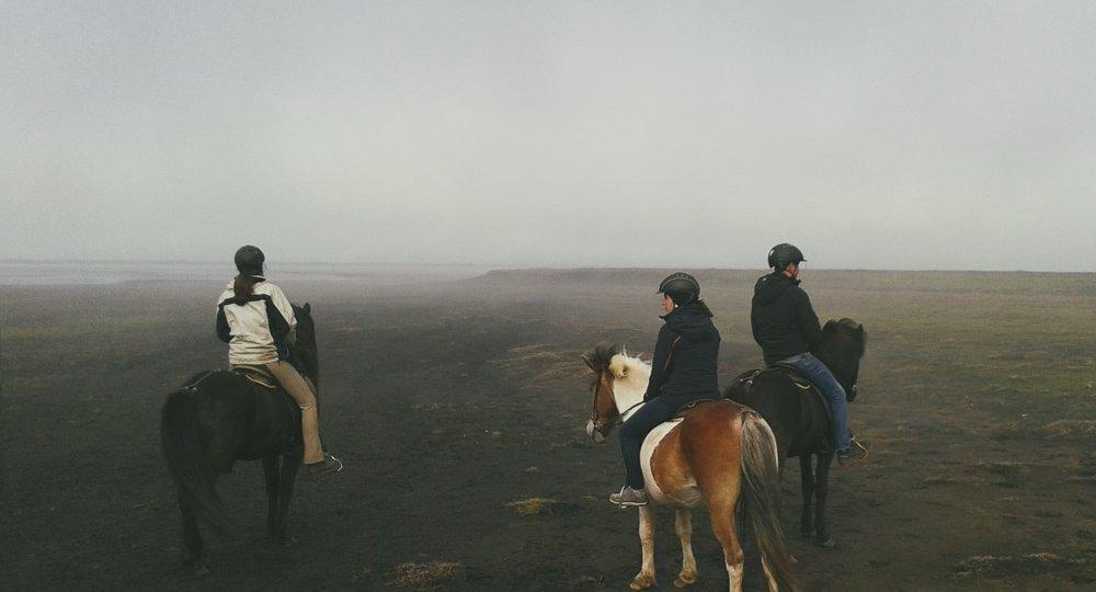 Husey Iceland horseback riding