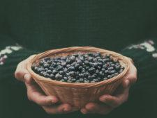 Blueberry fever