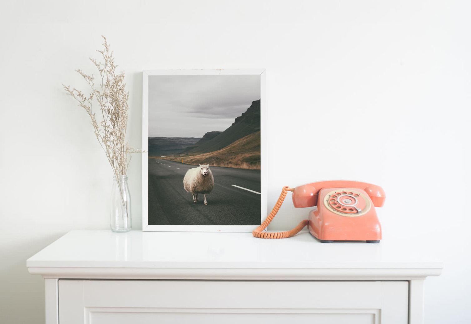 Owca na środku drogi