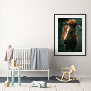 Icelandic horse print - portrait of a beautiful Icelandic foal. Check out finest quality horse wall decor by Adam Biernat at Bite of Iceland.