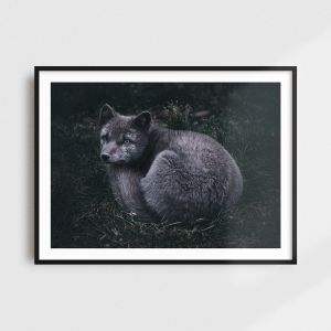 Arctic fox print - Scandinavian art by Adam Biernat