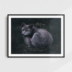 Arctic fox print - Scandinavian art by Adam Biernat