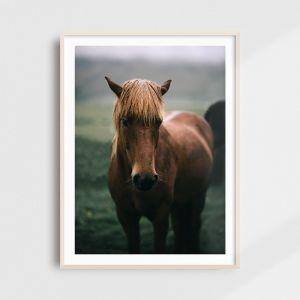 Icelandic horse print. Horse wall art by Adam Biernat.