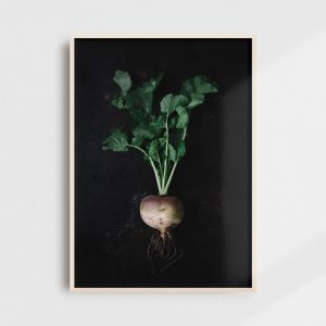 Kitchen wall art - Icelandic turnip. Kitchen wall decor by Adam Biernat.