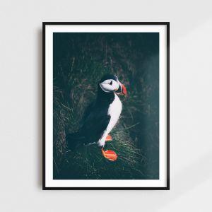Plakat skandynawski - maskonur. Fotografia kolekcjonerska - Adam Biernat.